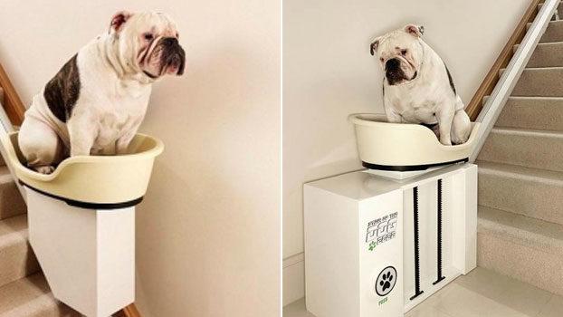 Montascale per cani disabili